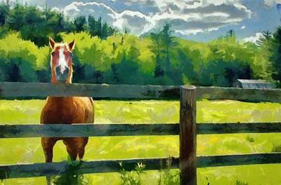 Fields Digital Art - Horse In The Field by Jeff Kolker