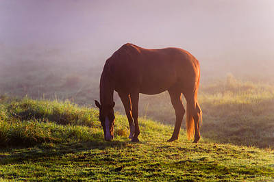Photograph - Horse In The Foggy Field by Jenny Rainbow