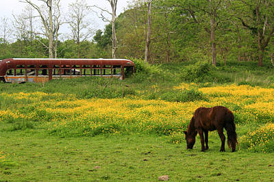 Photograph - Horse In The Meadow Near Weetamoo by Andrew Pacheco