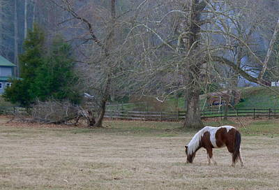 Photograph - Horse In The Mist by Denise Mazzocco