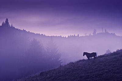 Purple Photograph - Horse In The Mist by Yuri Santin