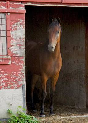 Photograph - Horse In The Old Barn by Ishana Ingerman