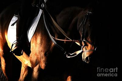 Horse In The Shade Art Print