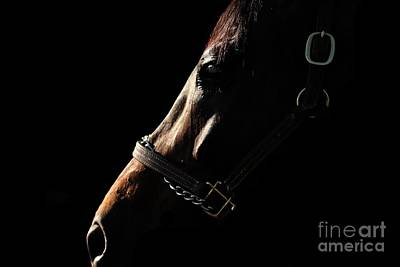Photograph - Horse In The Shadows by Janice Byer