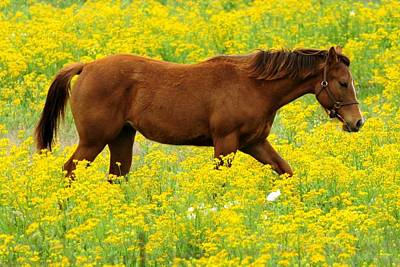 Photograph - Horse In Wildflower Field by Marilyn Burton