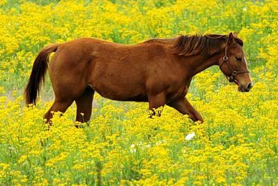 Photograph - Horse In Wildflower Field by Marilyn Burton