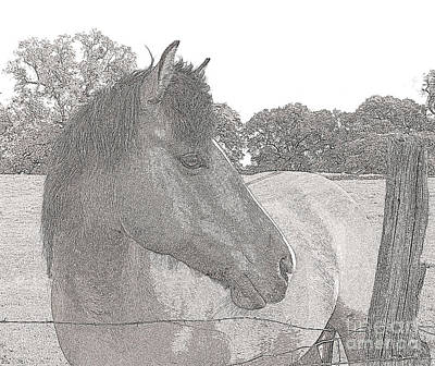 Art Print featuring the photograph Horse by Irina Hays