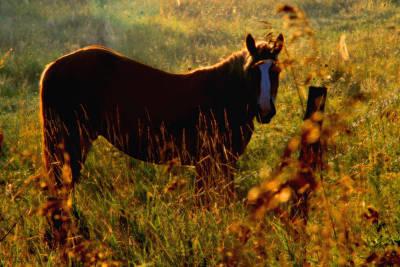 Horse Art Print by Jim Vance