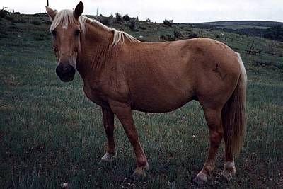 Photograph - Horse by John Mathews