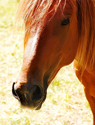 Animal Digital Art - Horse Look by Gina Dsgn