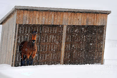 Photograph - Horse Looking At Snow Storm by Dan Friend