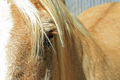 Animals Royalty-Free and Rights-Managed Images - Horse Looks by Shoal Hollingsworth