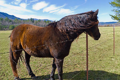 Photograph - Horse by Melinda Fawver