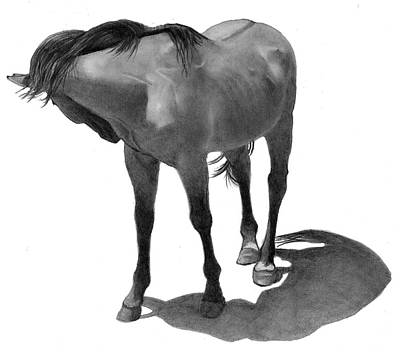 Drawing - Horse Nipping At Insects by Joyce Geleynse