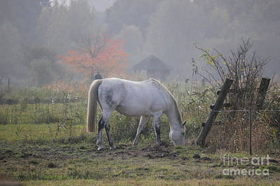 Horse On A Peaceful Day Art Print