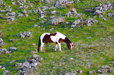 Rocky Photograph - Horse On A Rocky Hill - Donegal Irelad by Bill Cannon