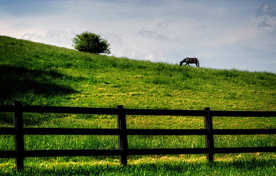 Horse Photograph - Horse On Hill by Greg Mimbs