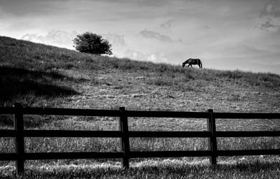 Horse Photograph - Horse On Hill In Black And White by Greg Mimbs
