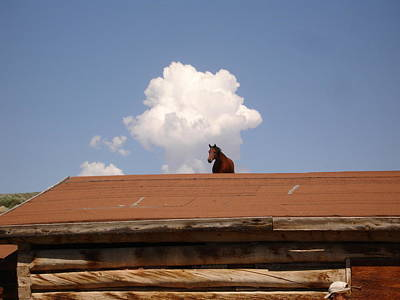 Kim Baker Photograph - Horse On Roof by Kim Baker