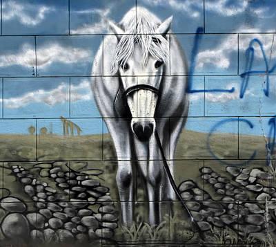 Photograph - Horse On The Brick by Daliana Pacuraru