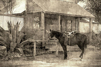 Photograph - Horse Outside Bar In Bandera Texas by Sarah Broadmeadow-Thomas