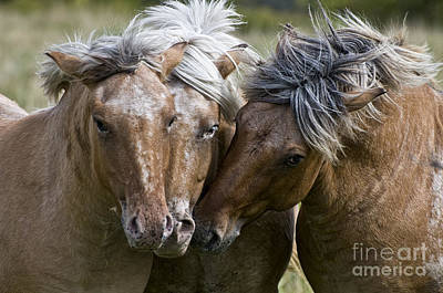 Abstract Male Faces - Horse Pictures 133 by World Wildlife Photography