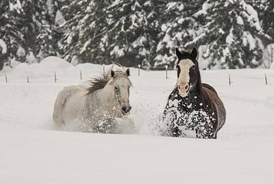 Clouds Rights Managed Images - Horse play Royalty-Free Image by Michelle Wilson