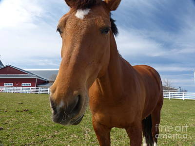 Pineland Farms Photograph - Horse Portrait by Christine Stack