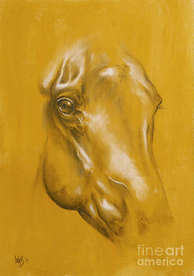 Horse Portrait Print by Tamer and Cindy Elsharouni