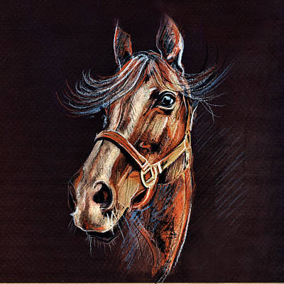 Drawing - Horse Portrait  by Daliana Pacuraru