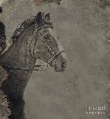Photograph - Horse Portrait by Kim Henderson