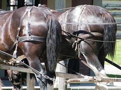 Photograph - Horse Power by Ann E Robson