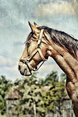 Horse Profile Art Print by Darren Fisher
