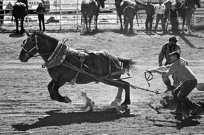 Photograph - Horse Pull Canada by Mary Lee Dereske