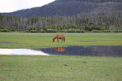 Kim Baker Photograph - Horse Reflection 2 by Kim Baker
