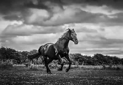 Horse Running In Field Art Print by Rory Turnbull / Eyeem