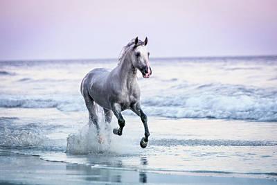 Photograph - Horse Running On Beach by Lisa Van Dyke