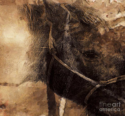 Mixed Media - Horse Sketch by Yanni Theodorou