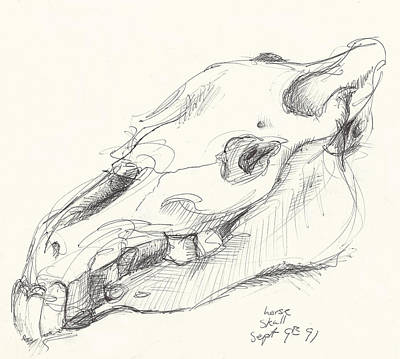 Messy Drawing - Horse Skull Study by Melinda Dare Benfield