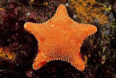 Radial Symmetry Photograph - Horse Star by Andrew J. Martinez