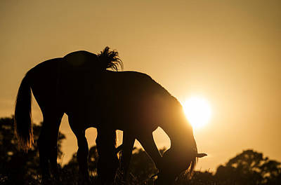Photograph - Horse Sunset by Michael Mogensen