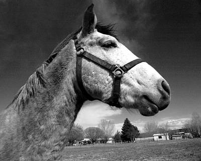 Photograph - Horse by Tarey Potter
