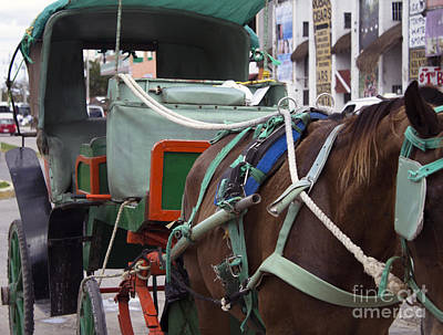 Horse Taxi Print by Steven Parker