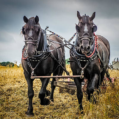 Two Horses Photograph - Horse Team by Paul Freidlund