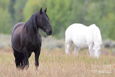 Photograph - Horse Teton National Park by Steve Javorsky