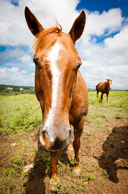 Horse Up Close Art Print by Alexey Stiop