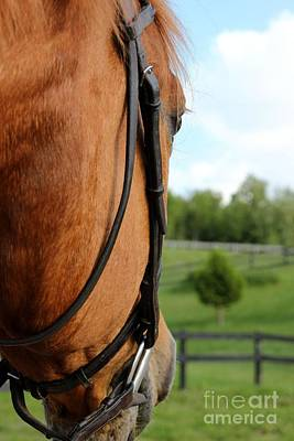 Photograph - Horse View by Janice Byer