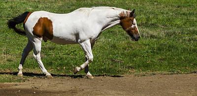 Equestrian Photograph - Horse Walking by David Millenheft