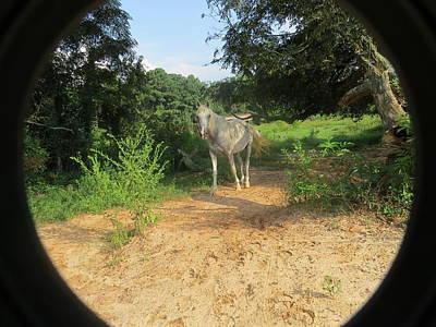 Photograph - Horse Walks Toward Camera by Aaron Martens