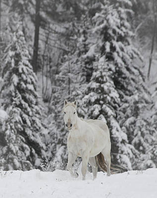 Photograph - Horse Winter by Diane Bohna